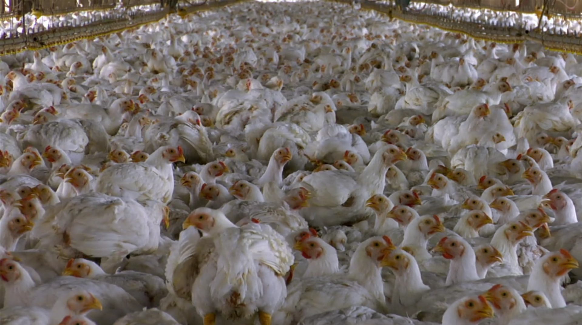 Food Inc - image 1