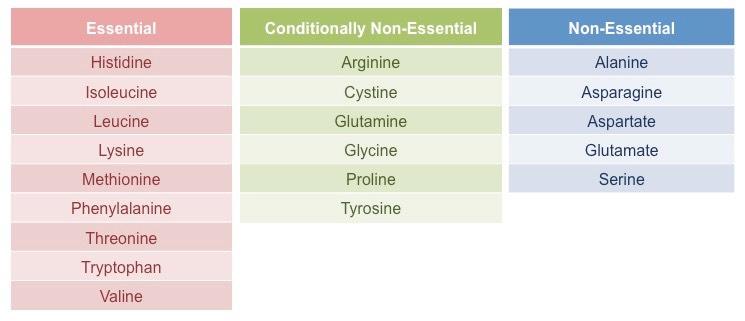 essential-amino-acids