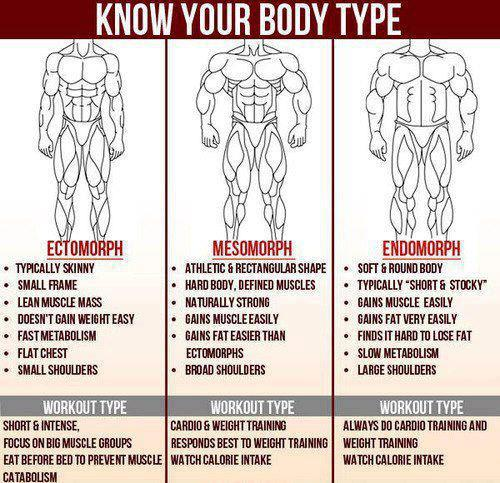 ectomorph mesoporh endomorph body types