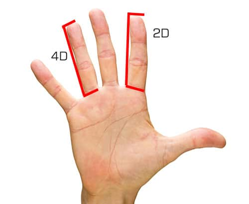 2D 4D measure testosterone levels finger length
